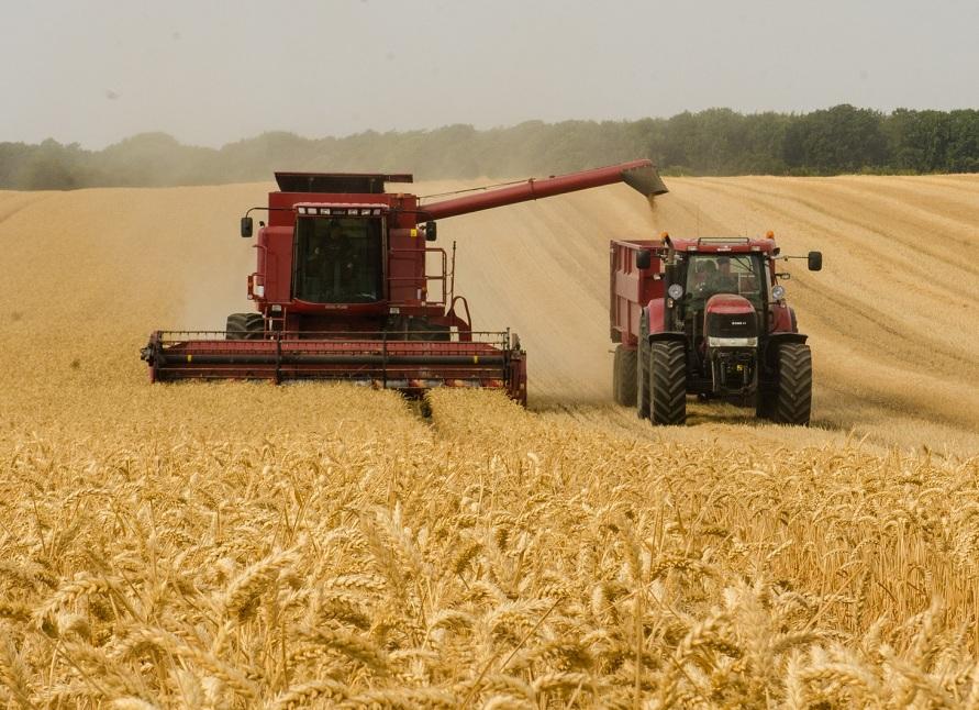 В Казахстане уже убрали 95% урожая