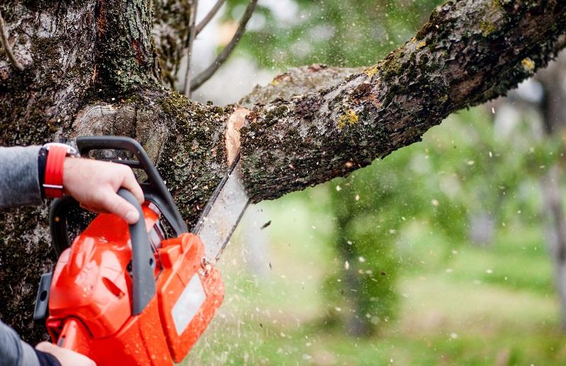 В минэкологии рассказали о наказании за вырубку деревьев у магазина Sulpak
