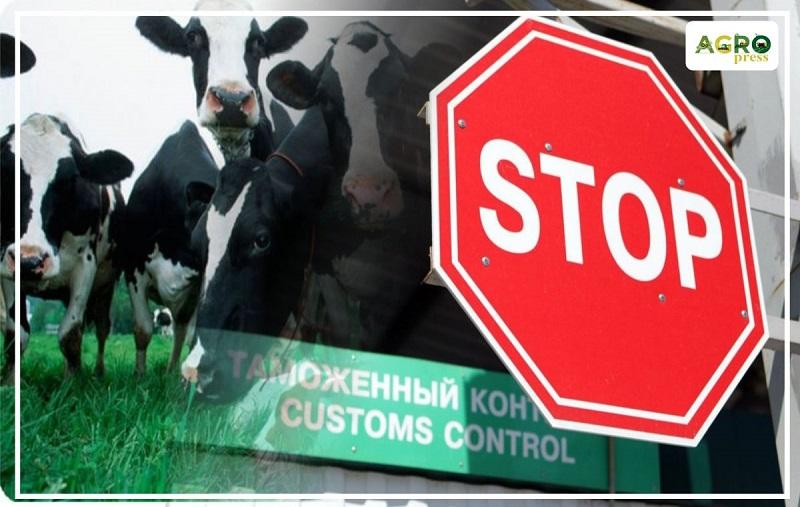 В Казахстан не пустили 50 голов КРС с поддельными документами