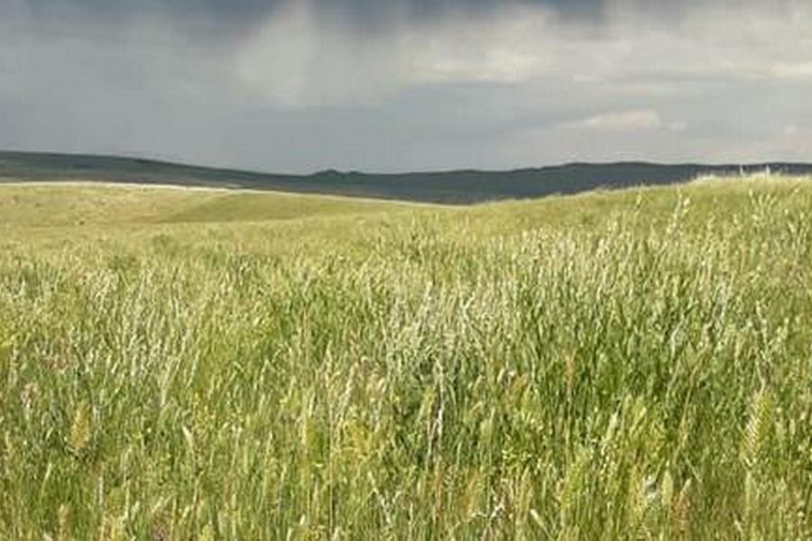 КазНИИ животноводства покажет фермерам перспективные пастбищные культуры