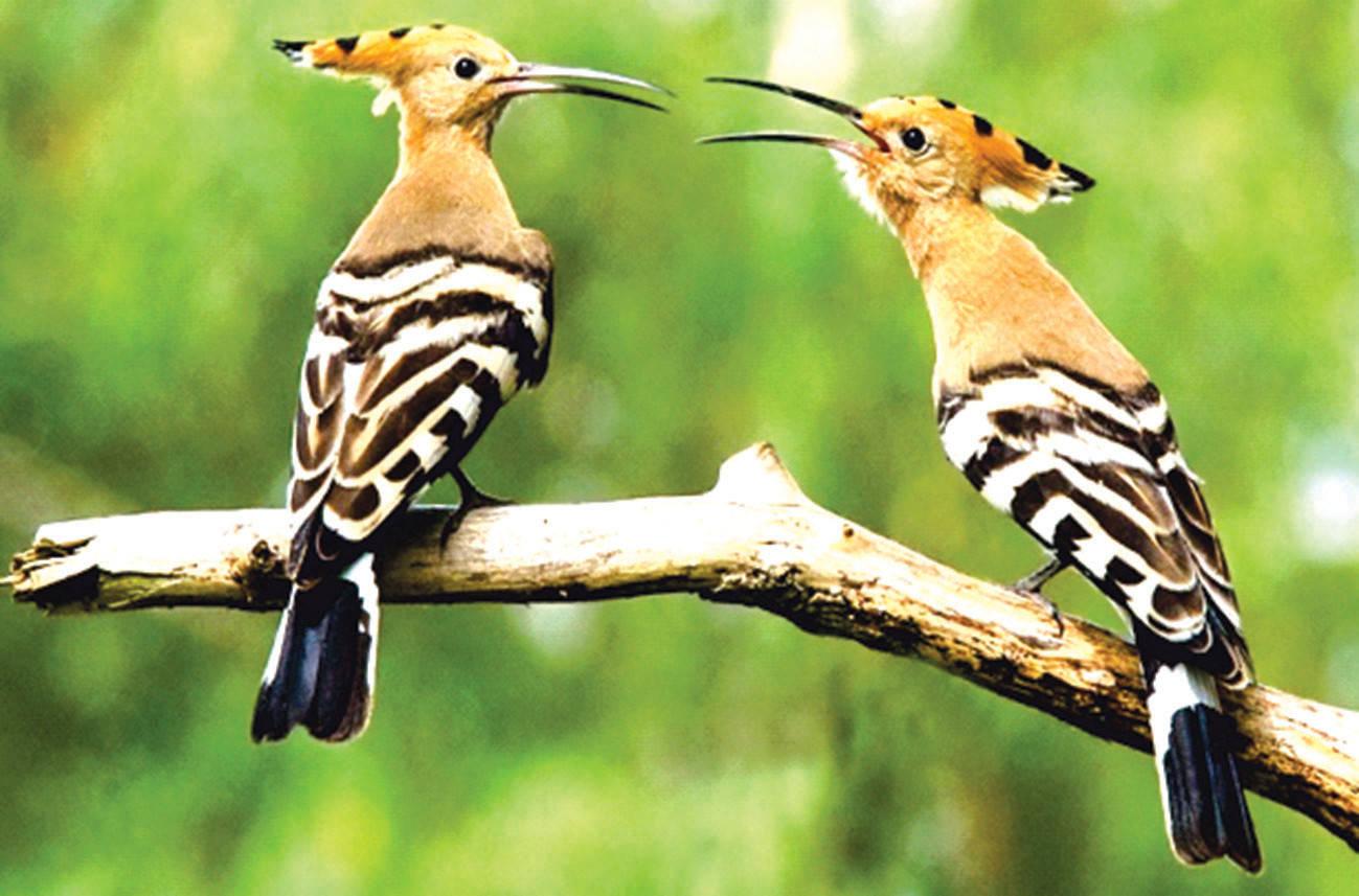 За последние 25 лет в ВКО почти исчезли 19 видов птиц