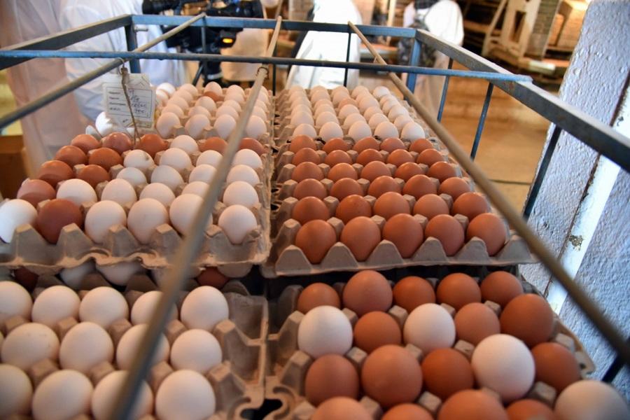 Производство яиц снизилось на 5,5% за год в Казахстане