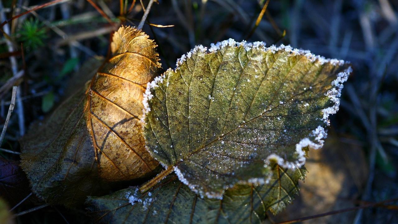 Погода в Казахстане: ночные заморозки ожидаются на юге
