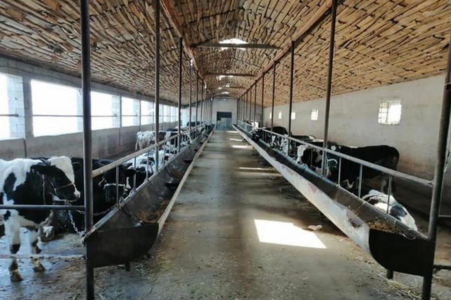 В Шымкенте планируют на треть увеличить производство мяса