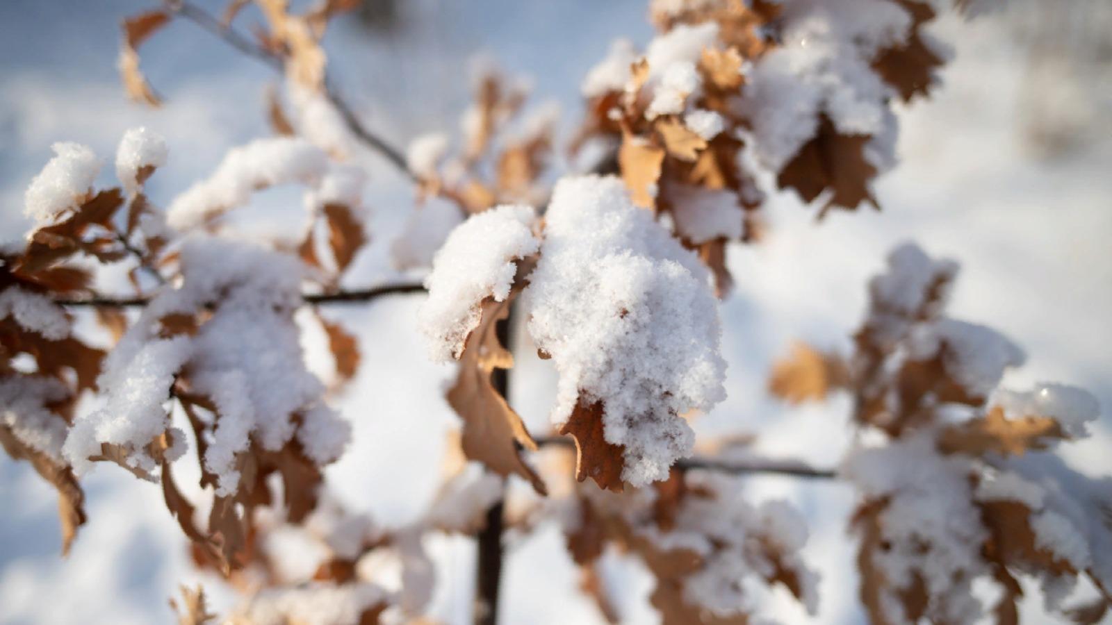 В Казахстан придут 30-тиградусные морозы