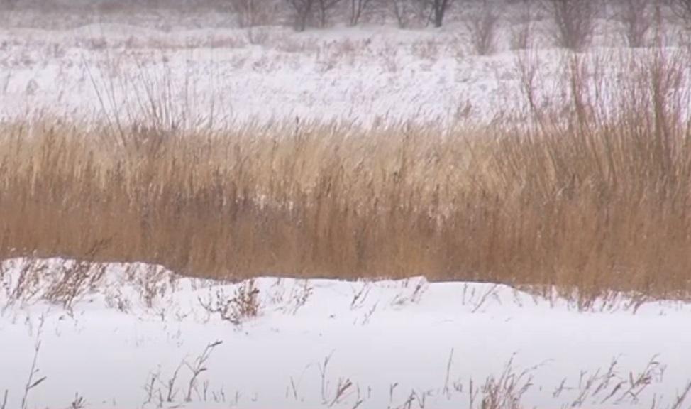В Караганде возле реки Веснянка впервые лежит белый снег