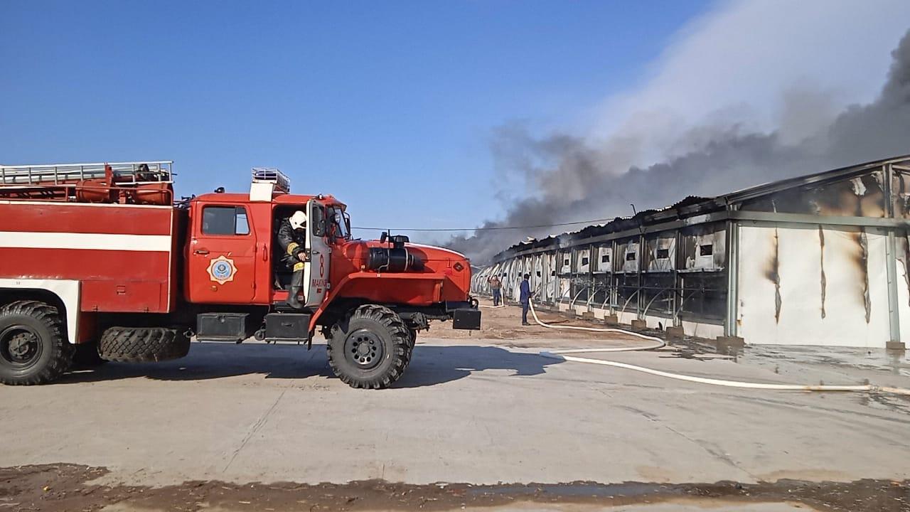 Макинск құс фабрикасындағы өрт 43 минутта сөндірілді