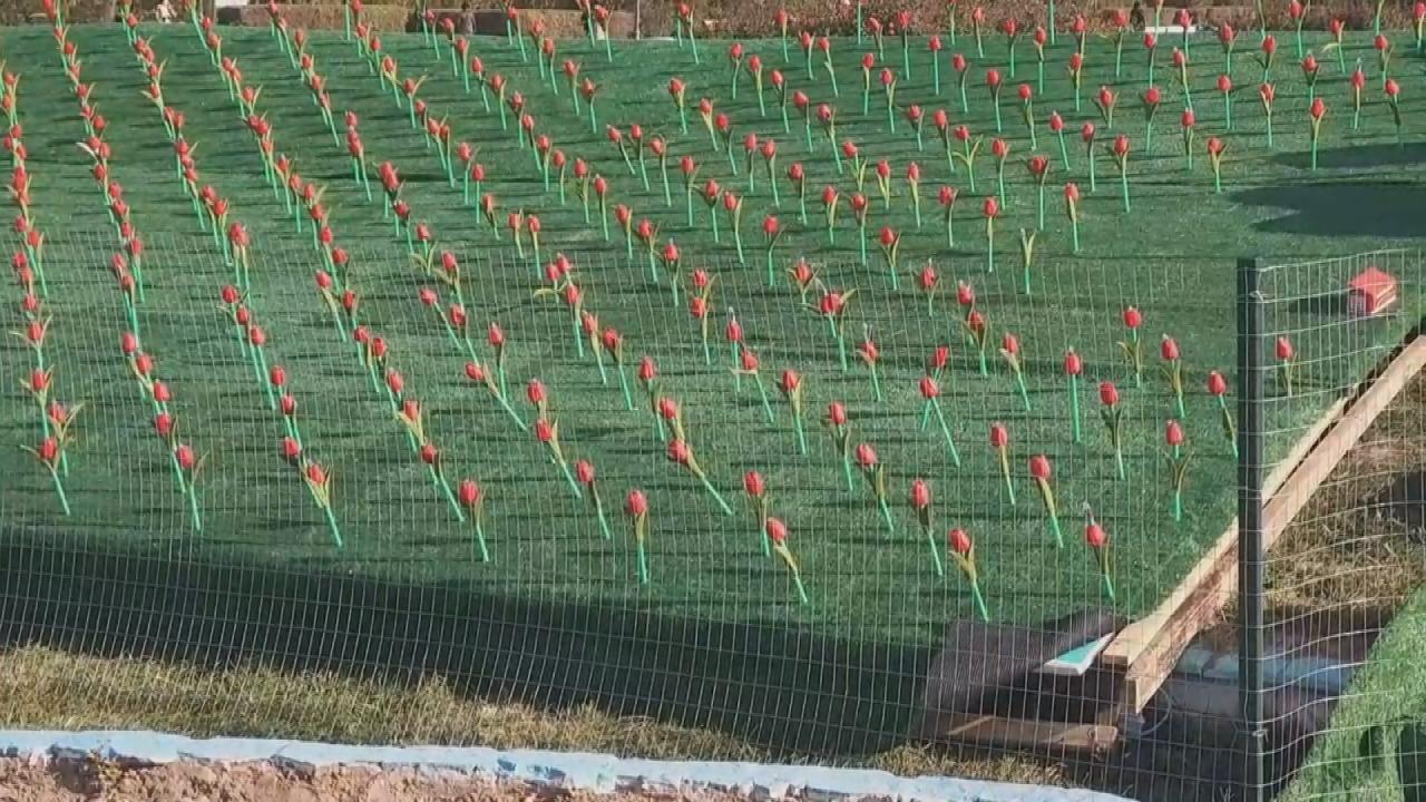 Ақтау әкімдігі 15 миллион теңгеге жасанды гүлзар «екті»