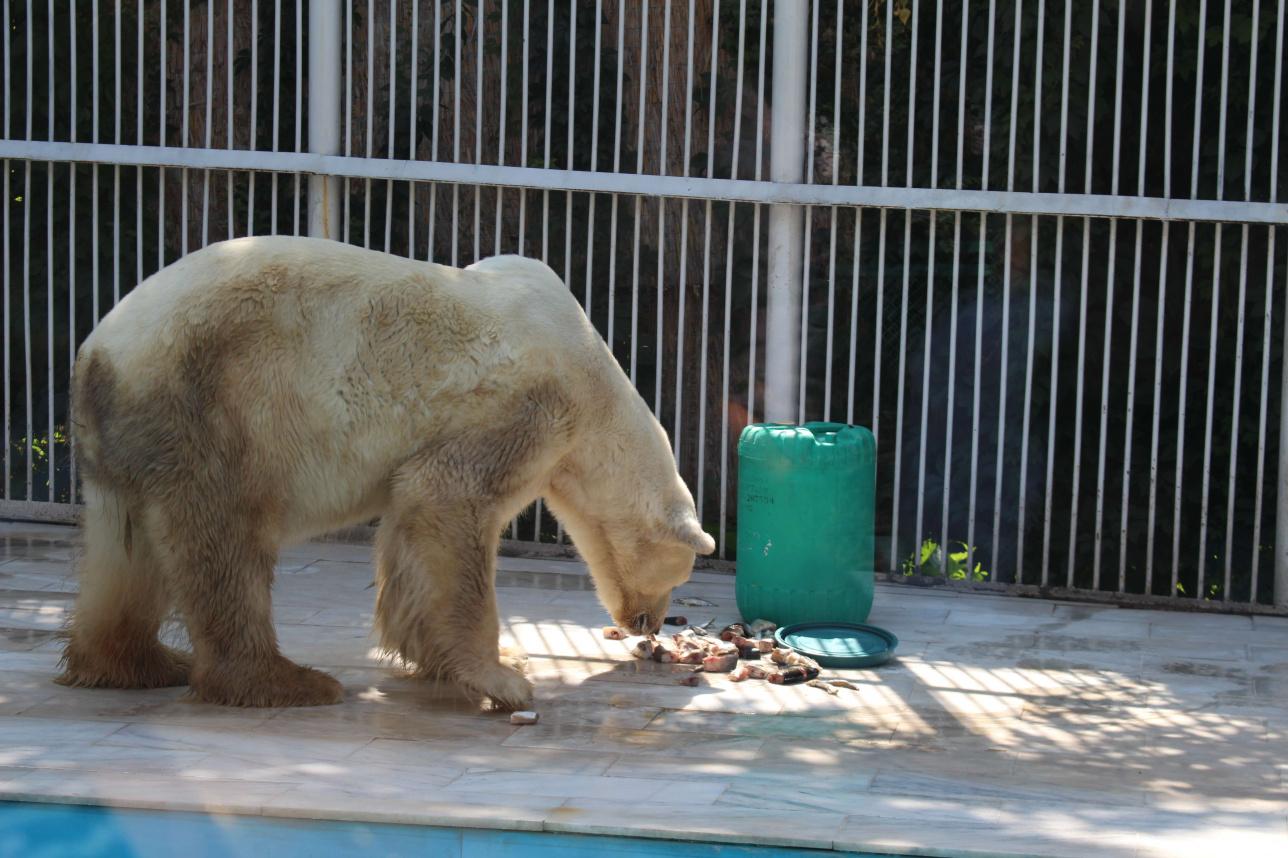 Музеи, библиотеки и зоопарк Алматы возобновили работу