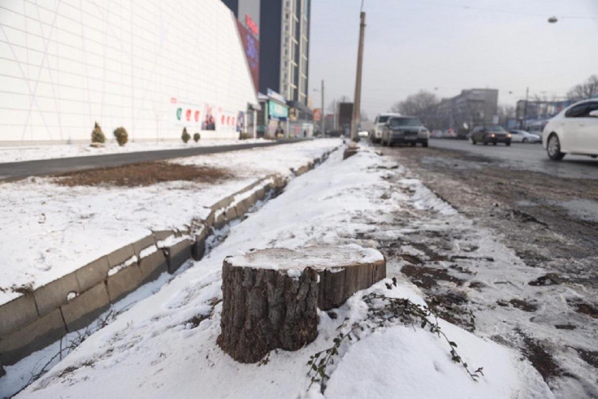 Управление «зеленой» экономики Алматы требует посадить деревья взамен уничтоженных