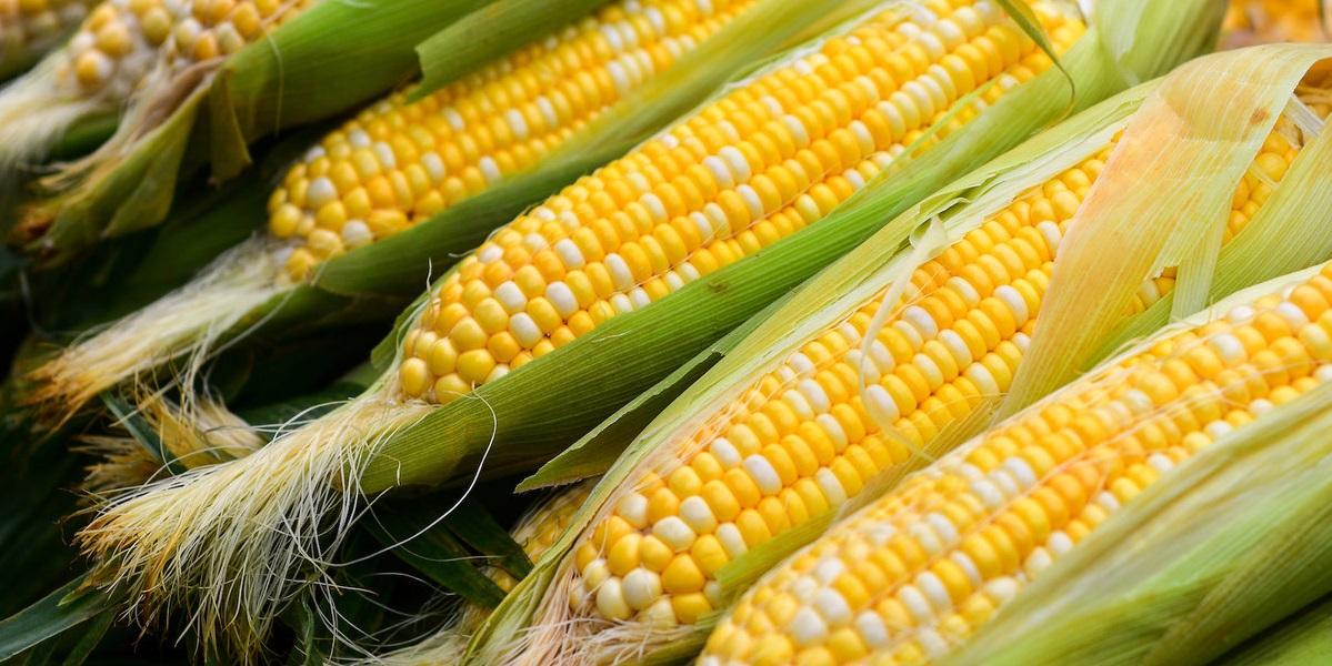 Производитель кукурузной продукции нуждается в сырье