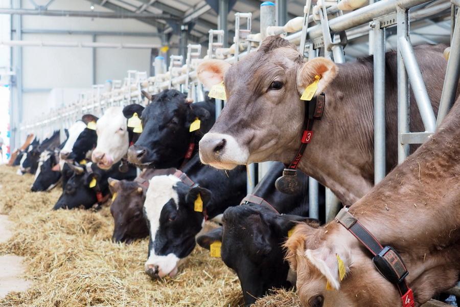 Счетный комитет раскритиковал систему субсидирования животноводства