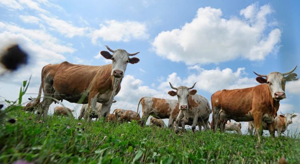 Количество сельскохозяйственных кооперативов в РК превысило 3000