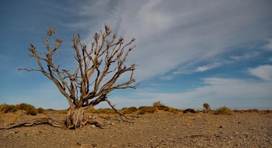 Высадить свыше 1 млн га саксаула планируется на дне Аральского моря