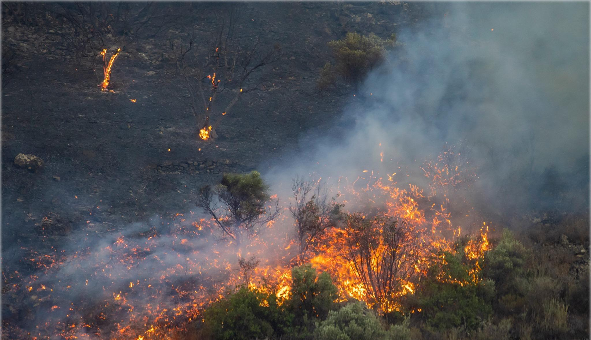 Кипр столкнулся с сильнейшим за десятилетия лесным пожаром