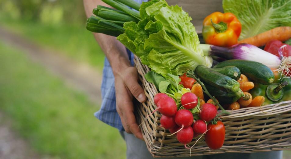 Пожар тушим керосином: производителей овощей зальют льготными кредитами?