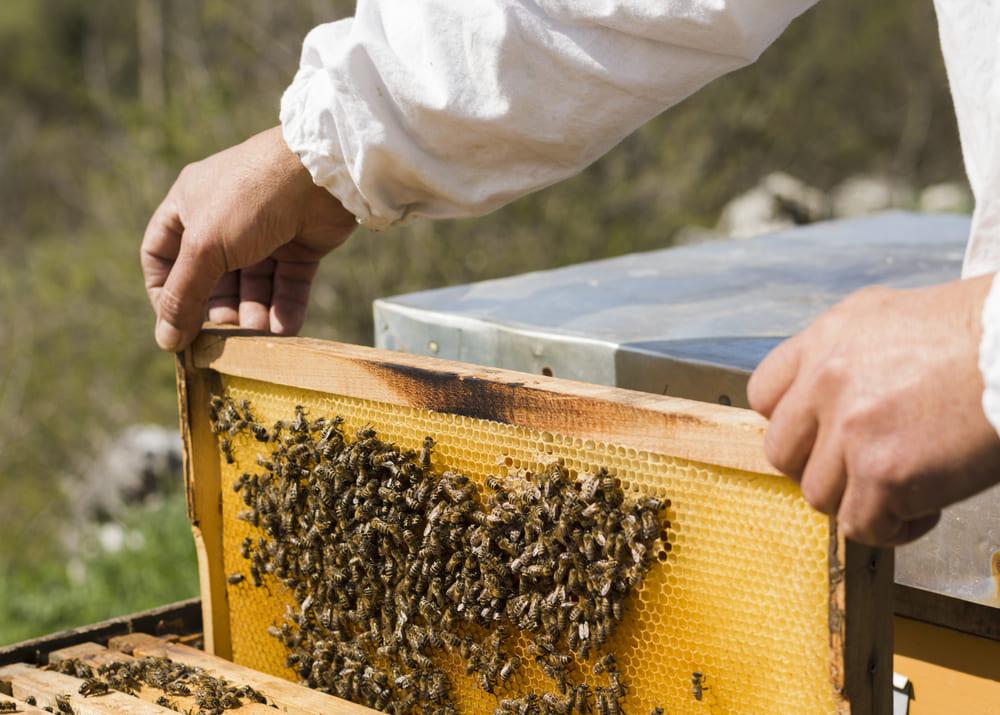 Сенаторы попросили поддержать пчеловодов и мараловодов