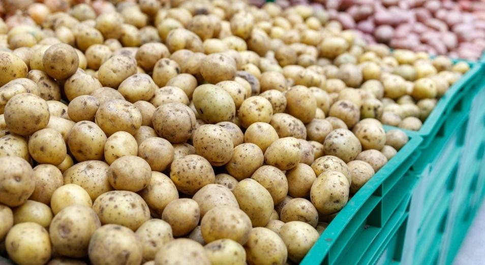 В МСХ прокомментировали ситуацию с картофелем