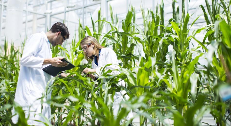 Антикор: 90% «грантников» по агронаправлениям не работают по специальности