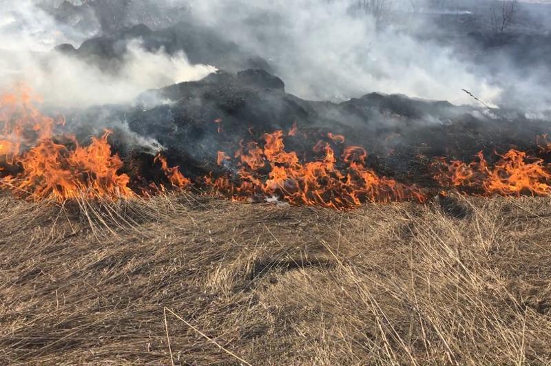 Сухостой и деревья горят в степном лесничестве в Павлодарской области