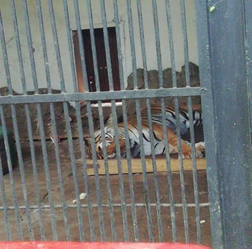 Средства на реконструкцию шымкентского зоопарка перенаправили на городскую инфраструктуру