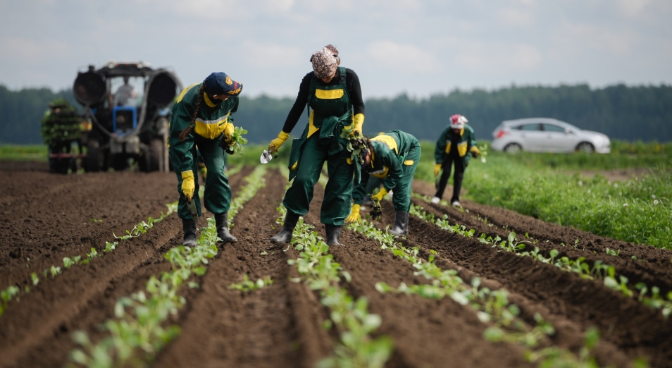 Работники сельского хозяйства получают зарплату вдвое меньше средней по стране