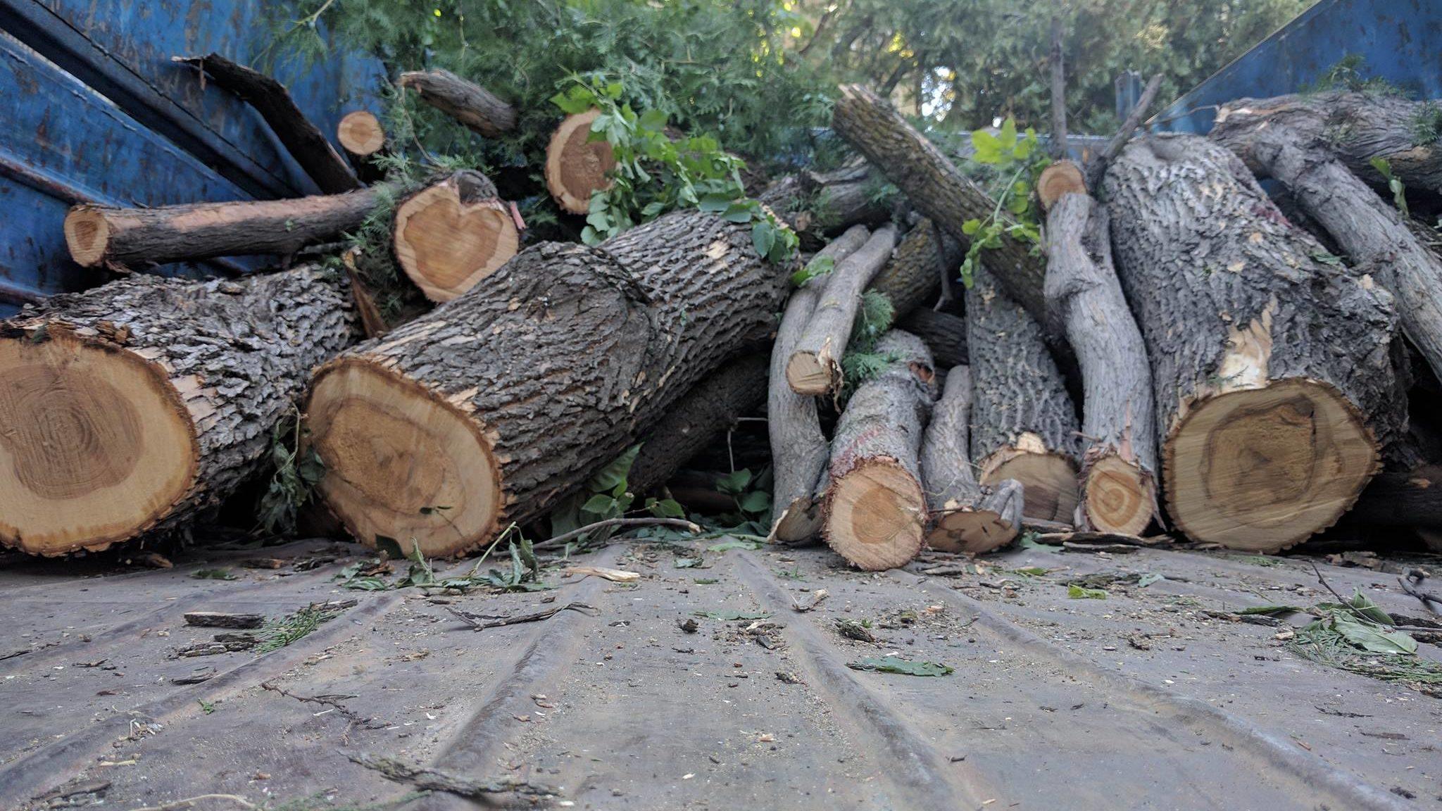 За незаконную вырубку деревьев ужесточили наказание