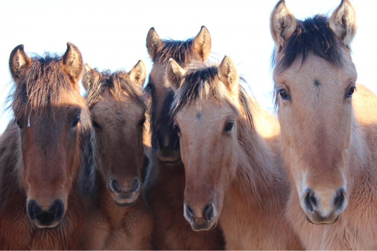 Сапархан Омаров прокомментировал ситуацию с истощенными лошадьми в Мангистау