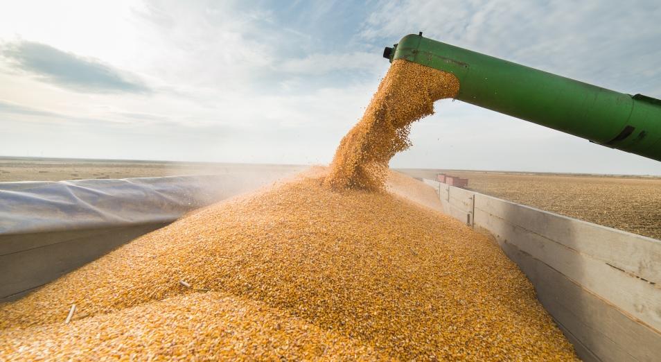Зернопереработчики РК: Контрабандная пшеница из России тоннами попадает в страну через «дырявые» КПП