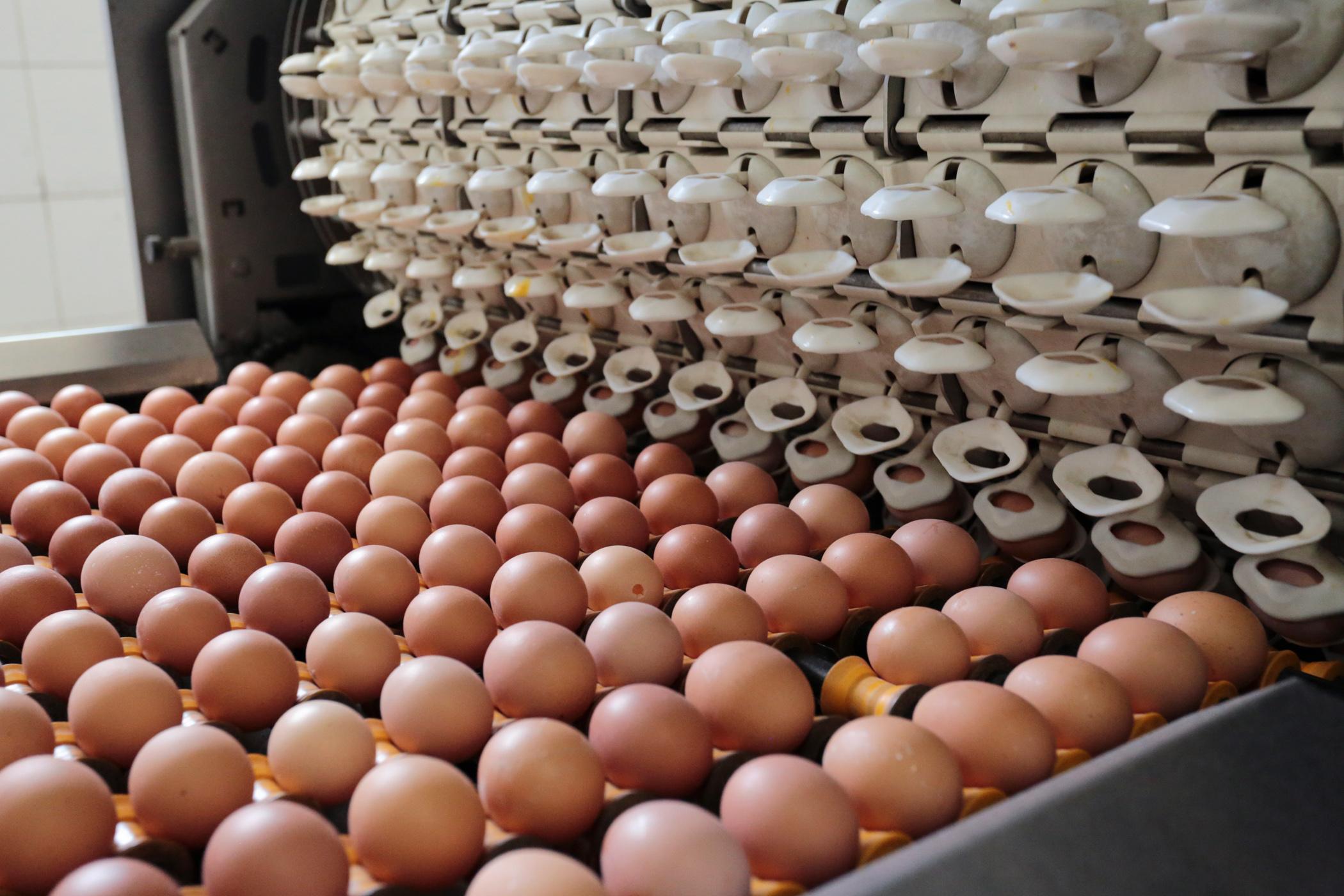 Минсельхоз ответил на просьбу птицефабрик поменять категорию социального яйца
