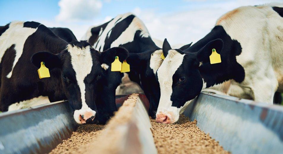 Животноводов Мангистауской области обеспечат кормом для скота
