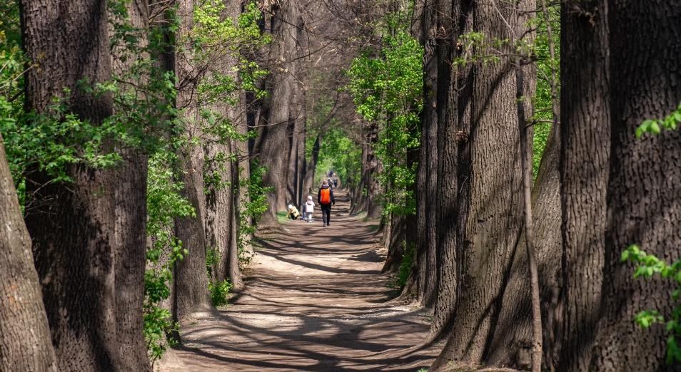 Исследования в «Роще Баума» начнутся в Алматы