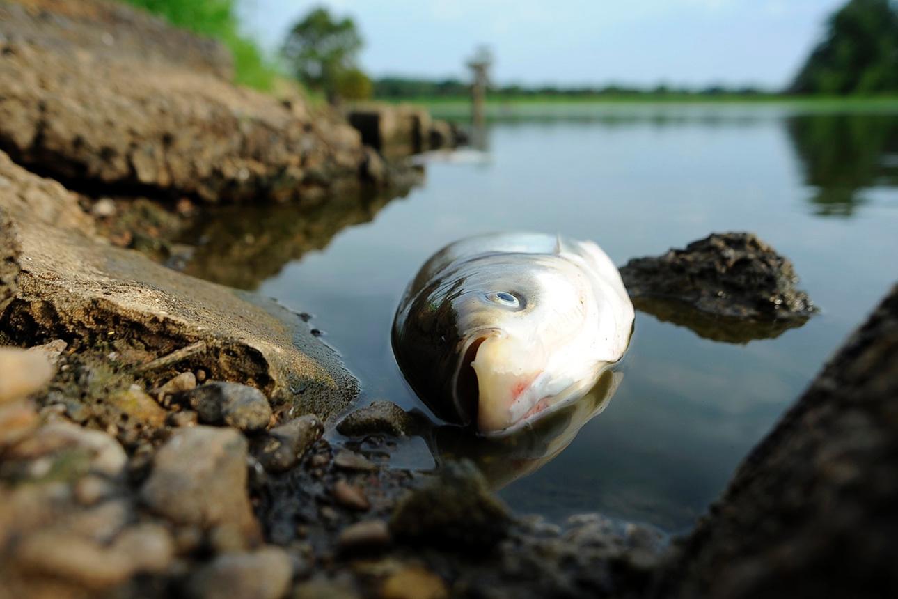 В протоке Иртыша в ВКО зафиксирована гибель рыбы