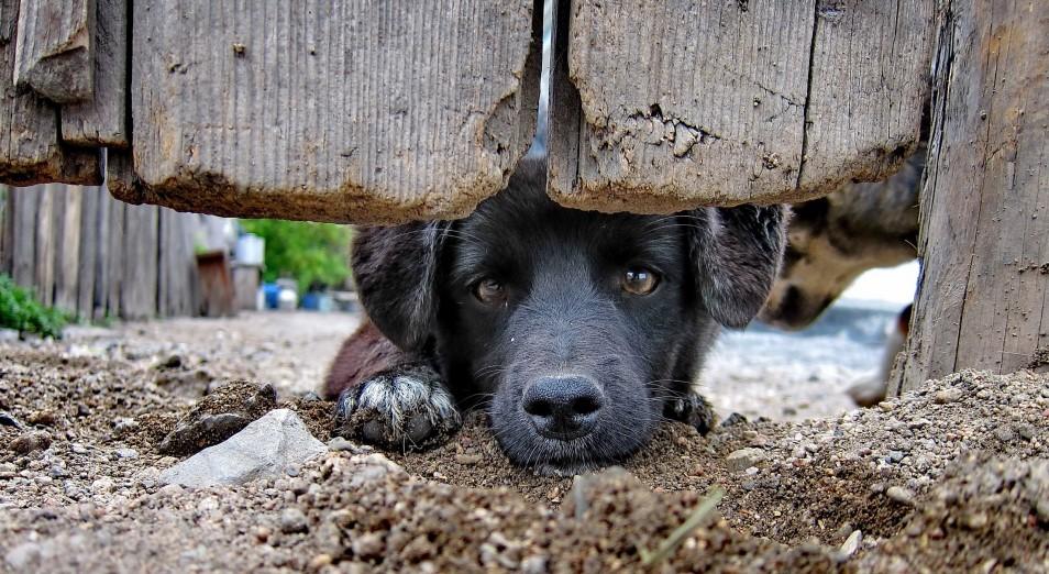 На 6% выросло количество правонарушений, связанных с жестоким обращением с животными