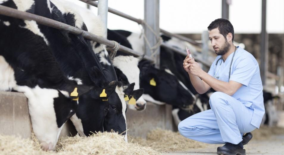 Фермеры ВКО: Ветеринаром работает тот, кто на «двойки» отучился