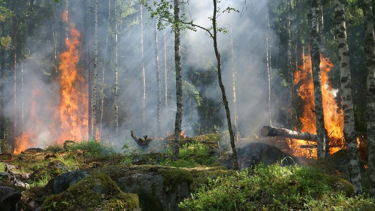 Готов ли Казахстан к ликвидации лесостепных пожаров