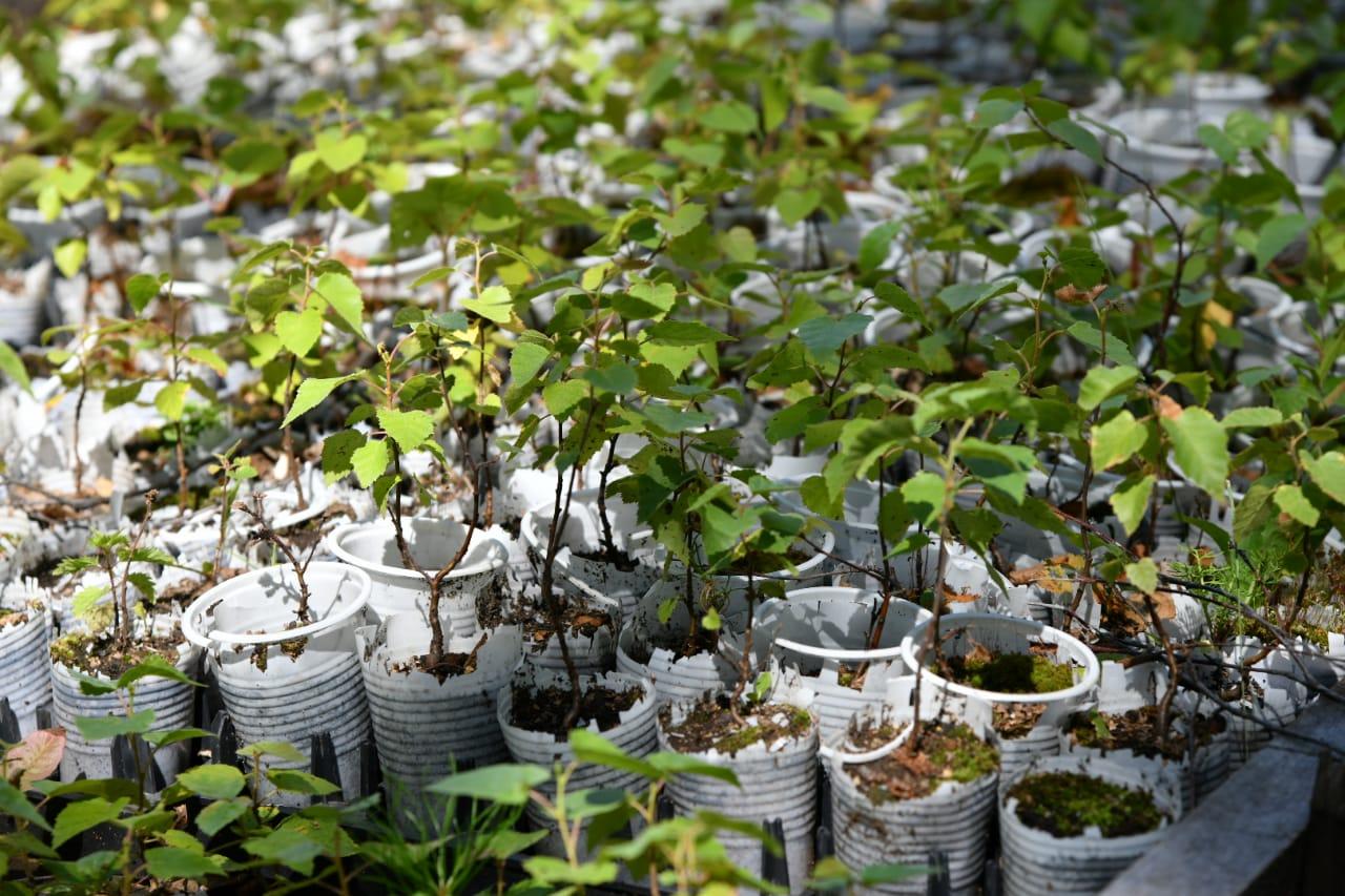 Биыл 130 млн түп ағаш отырғызылады