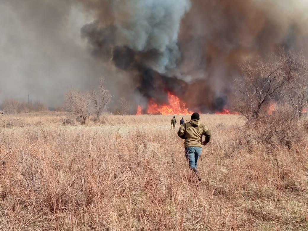 Балқаш ауданындағы өртті қураған ағаштар өршітіп тұр