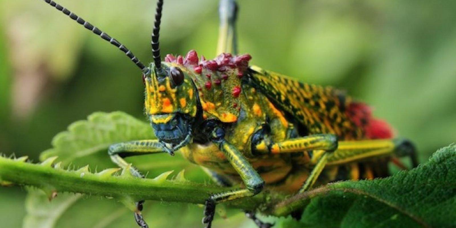 Темиртауская выпускница «Бастау Бизнес» открыла экспозицию редких насекомых