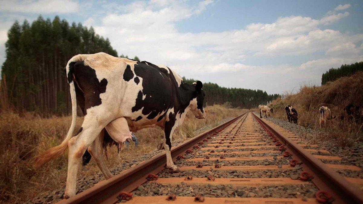 КТЖ доставит корма в Мангистау по льготным тарифам