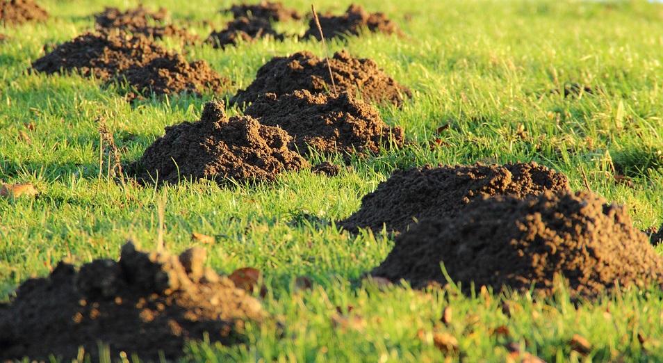 Павлодарские чиновники выдают бизнесу землю на заведомо незаконных условиях