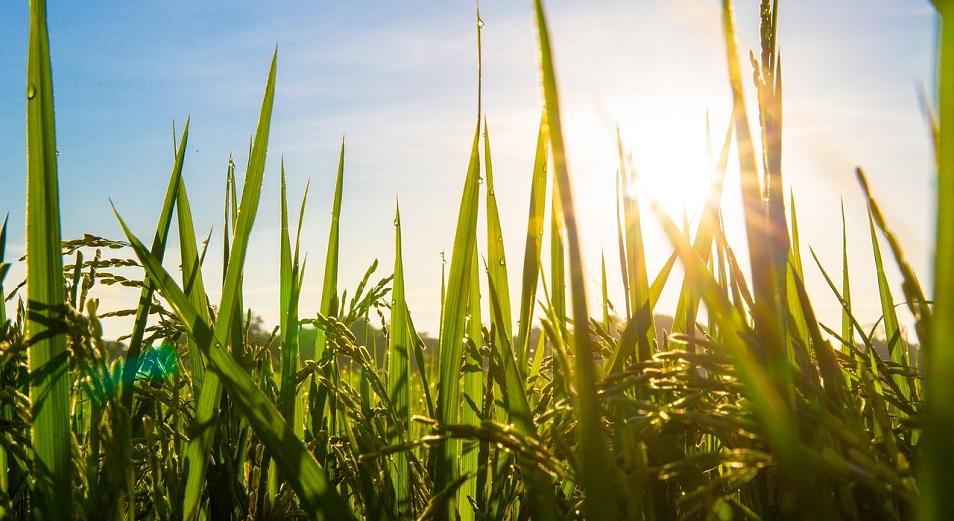 О скрытых схемах по землепользованию в Казахстане рассказал фермер