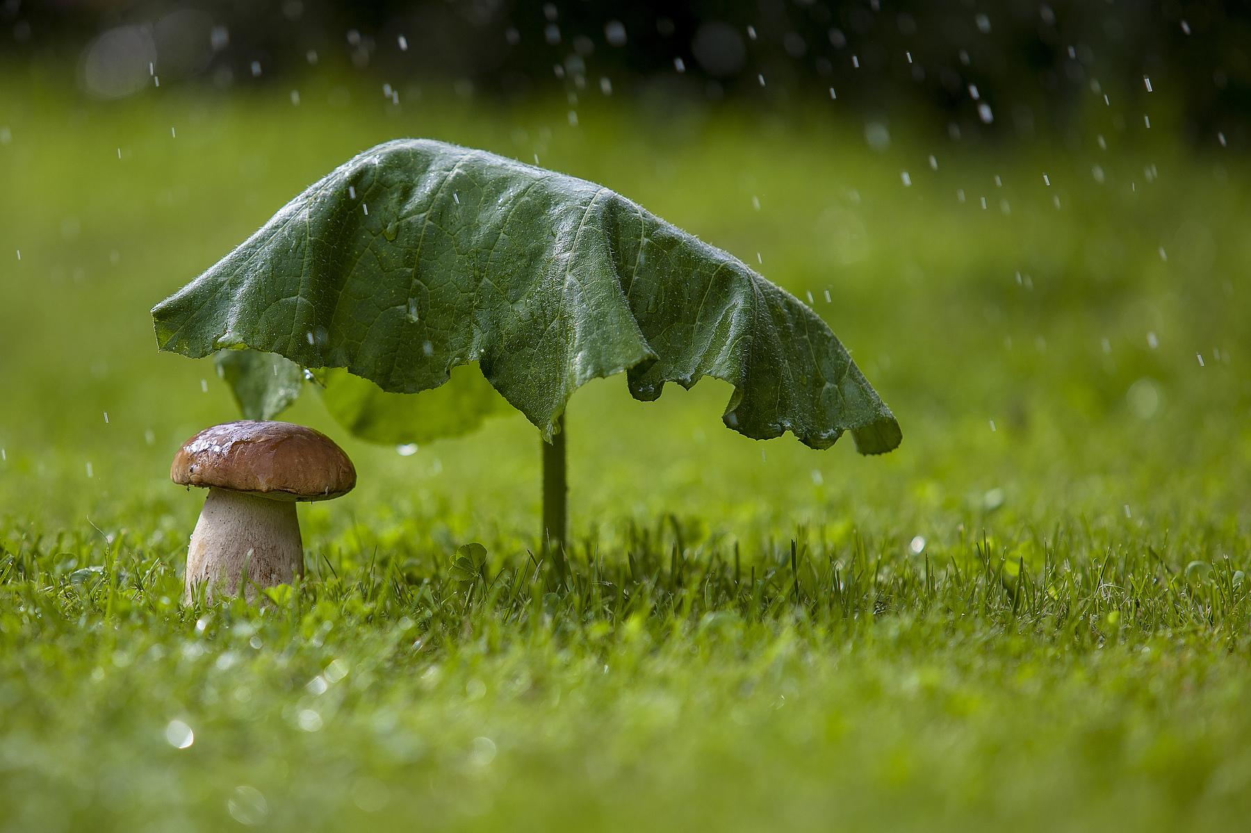 На западе и востоке Казахстана ожидается дождь