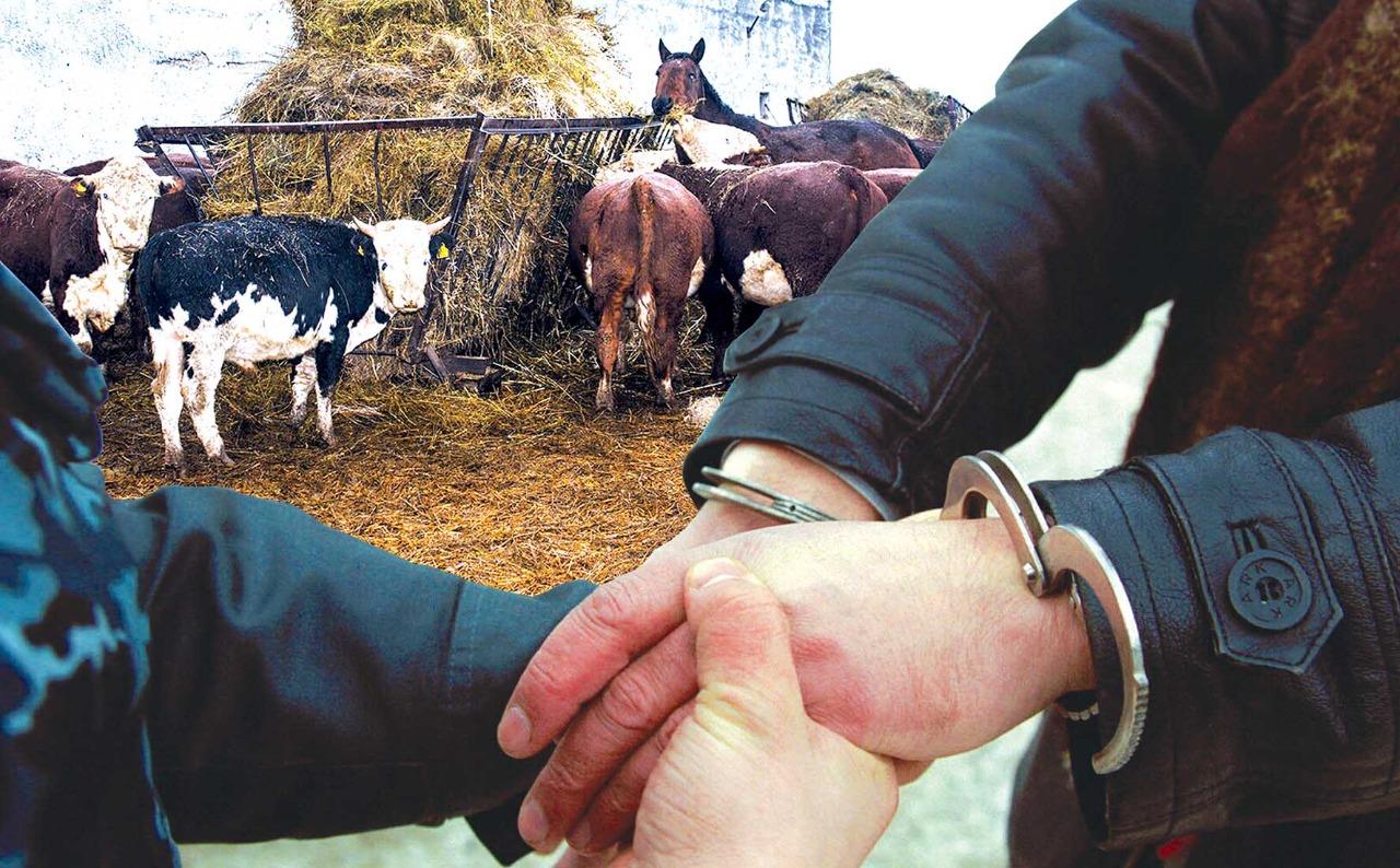 На 30,4% снизилось количество краж скота в Алматинской области