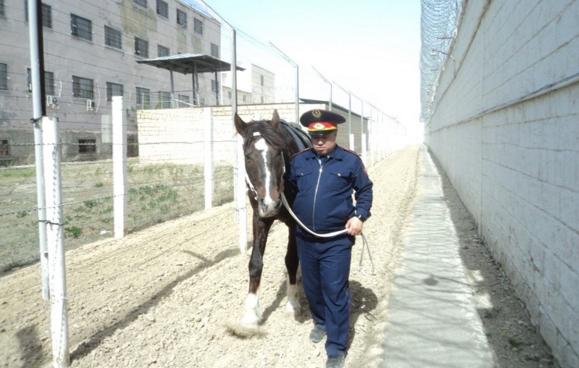 С подкопами в СИЗО Актау борются с помощью лошадей