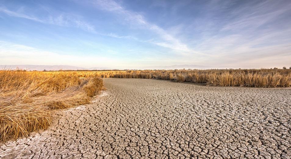 Засуха в Казахстане привела к низкой урожайности и оголила проблемы мясной отрасли