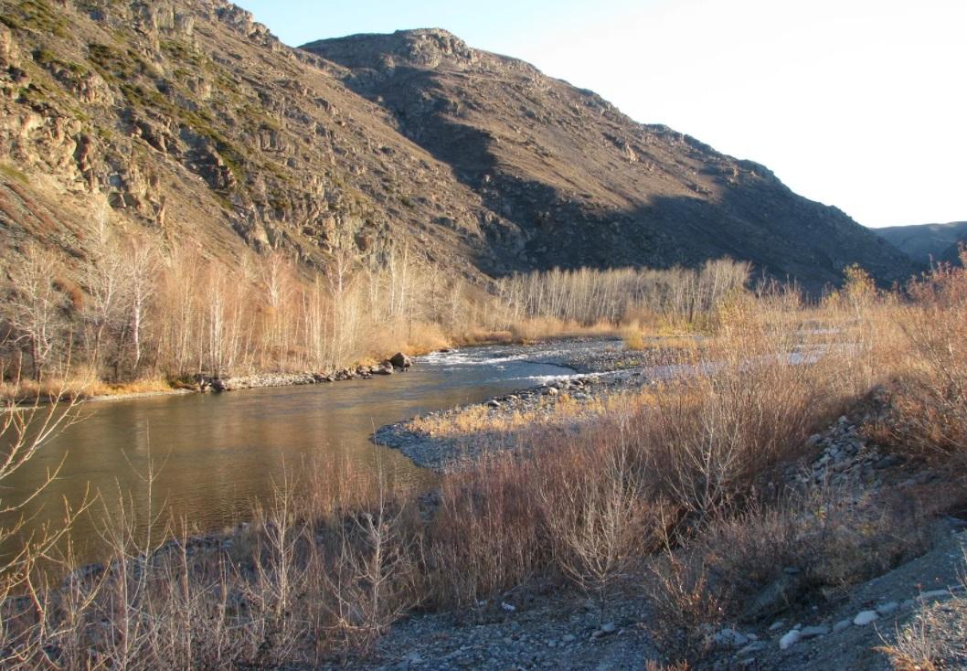 В ВКО вновь сообщили о загрязнении реки Курчум