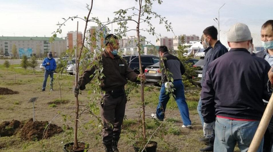 Сакуру посадила во дворе АНК ЗКО в Уральске 1 мая