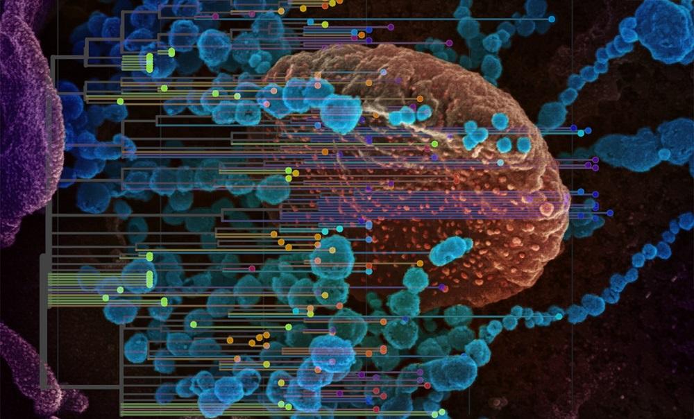 Обнаружен еще один ген, определяющий течение COVID-19