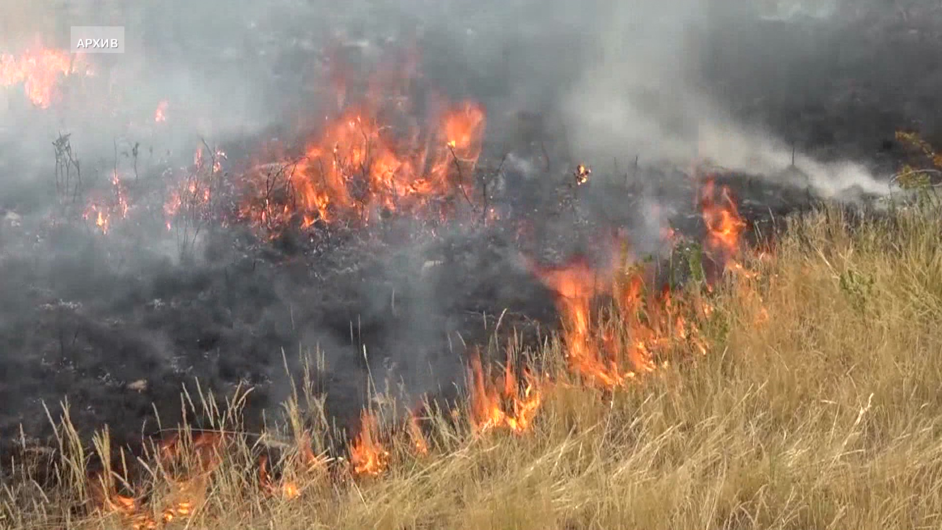 Сухостой площадью 1,5 га загорелся близ Алматы